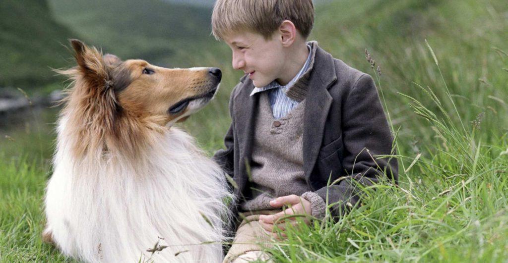 Мальчик и собака породы колли на природе