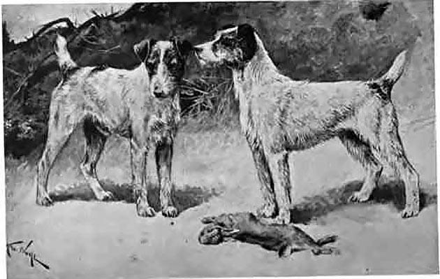 Два гладкошерстных фокстерьера на охоте с пойманной дичью